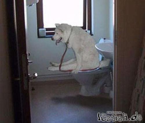 katze geht dauernd auf toilette