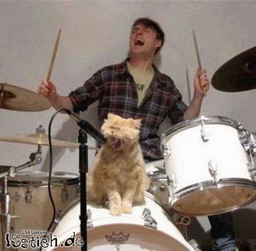 Katzenband