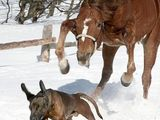 Pferd gegen Hund