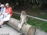 Sitzender Affe