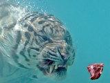 Tiger unter Wasser