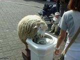 Trinkendes Schaf