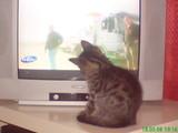 TV Katze