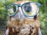 Eule mit Brille