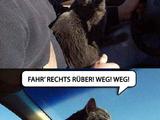 Tierisch guter Fahrlehrer