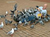 Überfall der Tauben
