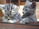 Katze beim Psychiater