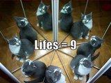 9 Leben
