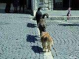 Hunde gehen auf den Strich