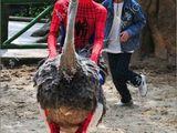Batman hat sein Batmobil, Spiderman seinen Vogelstrauß