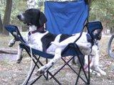 Chillender Hund