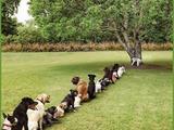 Folgen von Abholzung