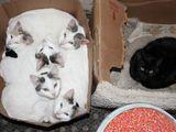 Diskriminierung unter Katzen