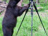 Bärischer Kameramann