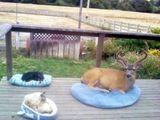 Jedes Tierchen sein Platz