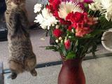 Blumen für mich?