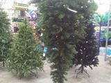 Tannenbaum aufstellen