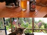 Der Geschmack von Bier