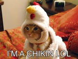 Chickencat