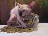 Geldgierige Katze
