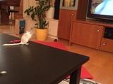 Jeder schaut gern fern