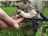 Eichhörnchensoldat