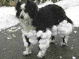 Klebriger Schnee