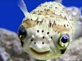 Fröhlicher Fisch