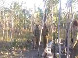 Soldat greift Baum an