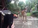 Singender Hund