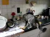 Hilfe beim Abwasch