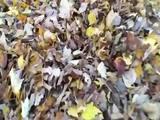 Herbstfreude