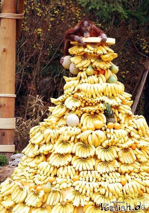 Vorrat an Bananen