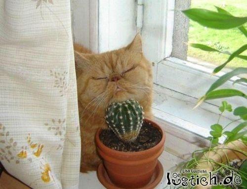 Echt weicher Kaktus