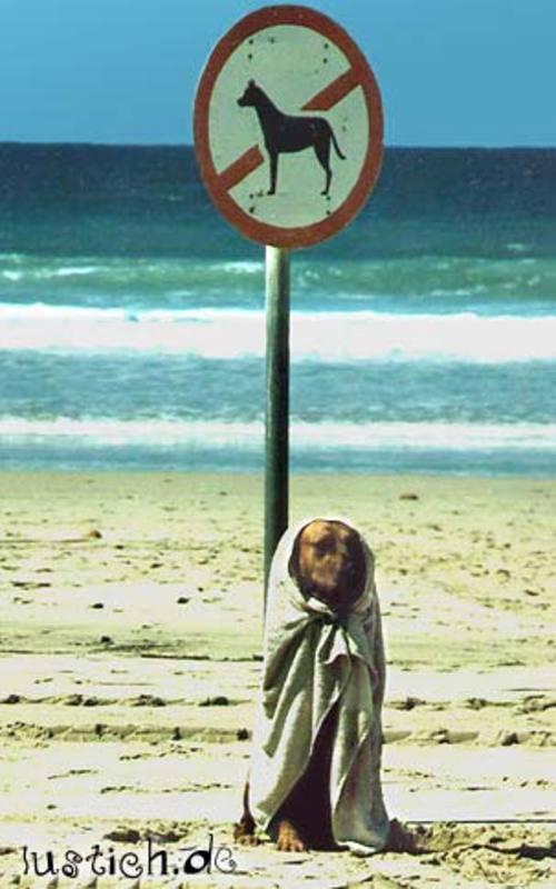 Illegaler Hund