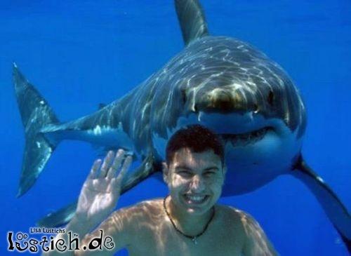 Urlaubsfoto mit Hai