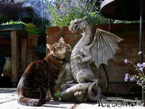 Drache krault Katze