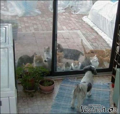 Katzen Versammlung