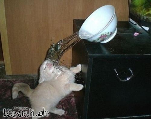 Katze vs Wasserschüssel