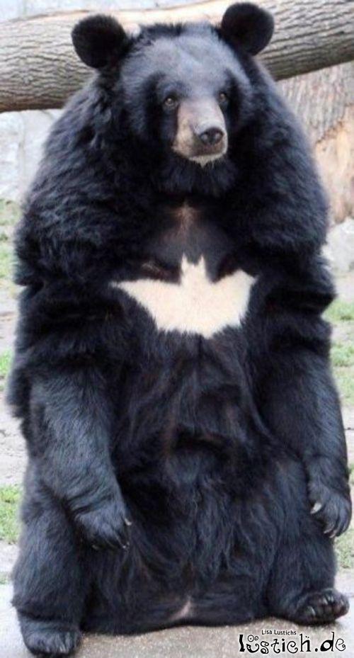 Batman-Bär