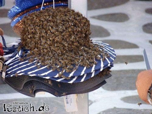 Bienenhut