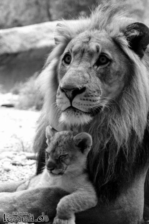 Löwensitter