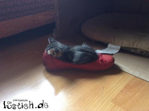 Schuh annektiert