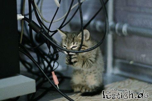 Stromkabel durchtrennen