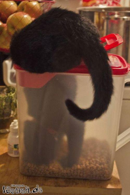 Sehr hungirge Katze