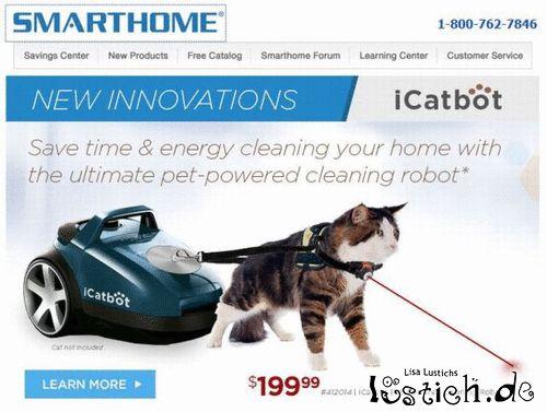 Katzenreinigung