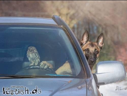 Tierischer Roadtrip