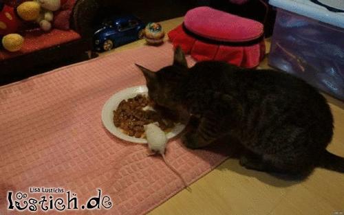 Wenn Katz' und Maus sich lieben