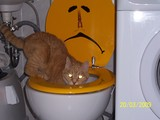 Katze sucht im Klo.