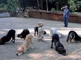 Hundeakrobatik